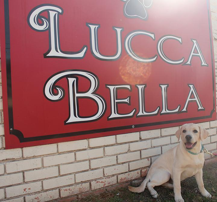 Lucca Bella Doggie Spa Boutique Dallas Tx