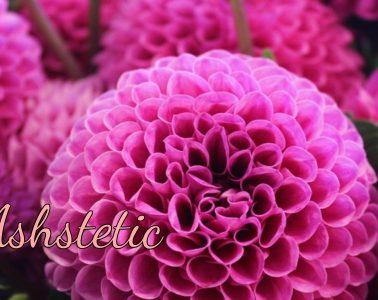 ashstetic