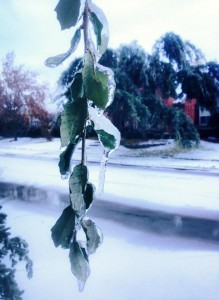 WINNING PHOTO Senior Melody Tong won a $10 Starbucks gift card for her winning photo of leaves covered in ice. Photo provided by Melody Tong
