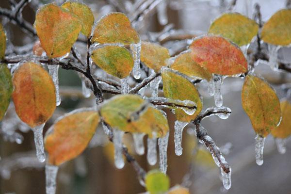 Photo Slideshow: Hockaday on Ice