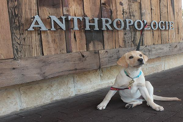 Dog Friendly Dallas