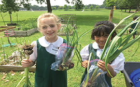 Lower School Garden Vandalized