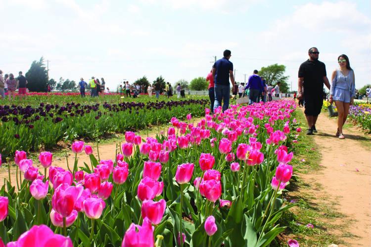 CitySlicker: Spring Has Sprung