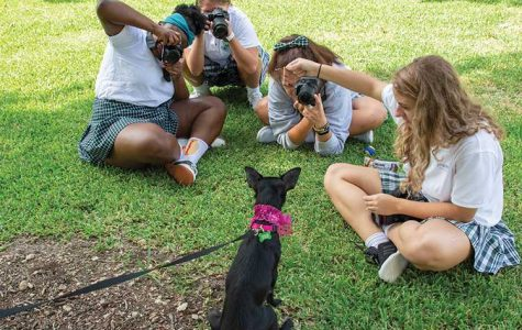Paws for a Cause: Photography and Service