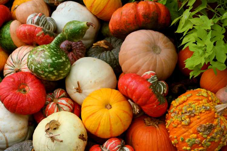 Fall at the Dallas Arboretum: A Sneak Peak